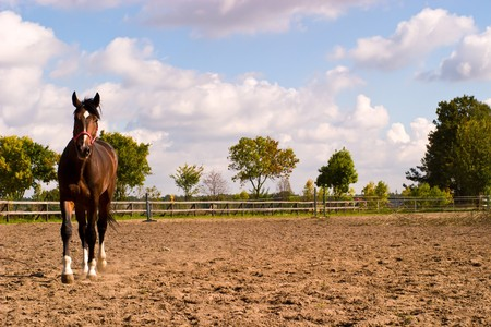 Beautiful Horse in a Green Meadow in sunny day Stock Photo