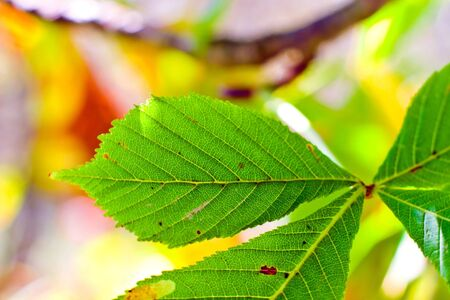 autumn background with colored leaves on wooden board Stock Photo - 7931562