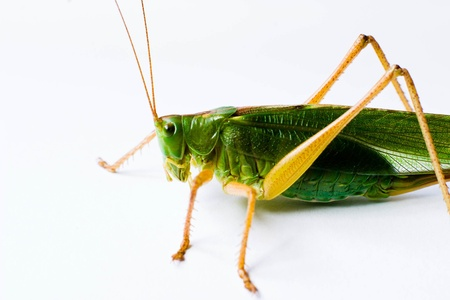 insect resting on a plant, insect sitting on a green grass Stock Photo