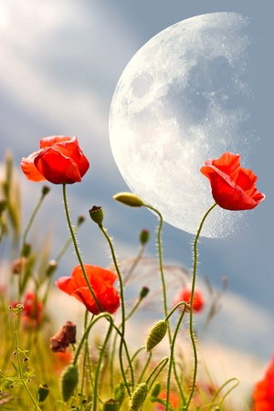 flowers on colorfull background - macro photo Stock Photo