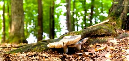 seta: hongo de bosque en moss despu�s de lluvia durante mucho tiempo bir