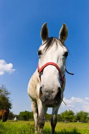 Beautiful Horse in a Green Meadow in sunny day Standard-Bild