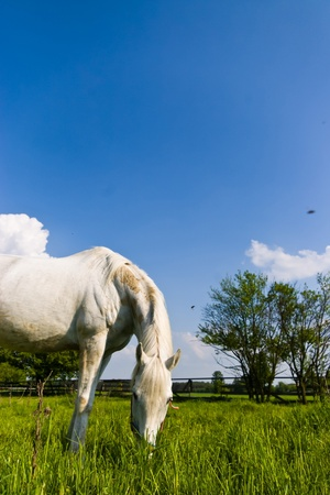 Beautiful Horse in a Green Meadow in sunny day photo