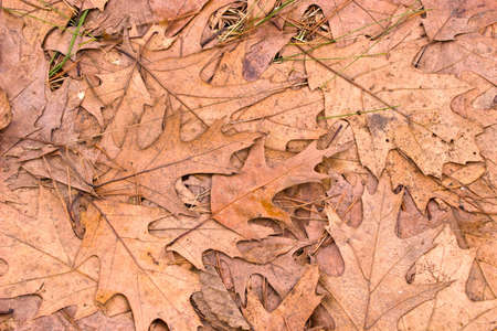 autumn background with colored leaves on wooden board Stock Photo - 9660362