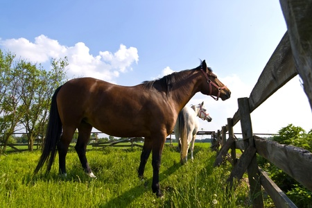 stable: Beautiful Horse in a Green Meadow in sunny day Stock Photo