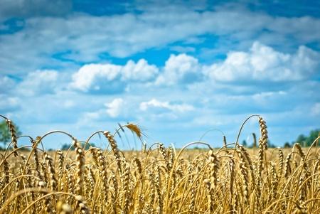 landwirtschaftlichen Bereich, Natur und Landwirtschaft Landwirtschaft Serie