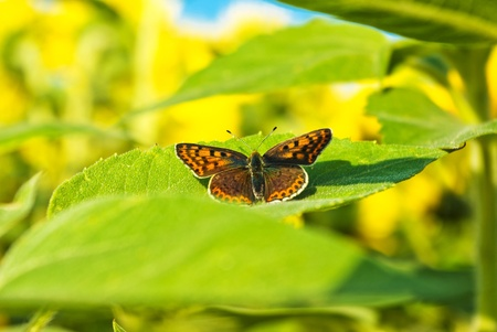 Close up shot of a butterfly on a leaf with a green background photo