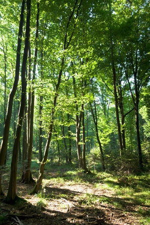 spring time: Sunlight in the green forest, spring time