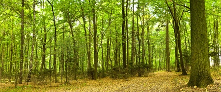 пышной листвой: Солнечный свет в зеленом лесу, летнее время