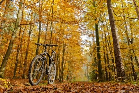Farbe Fahrrad in sonnigen Tag, Fahrrad-Serie,