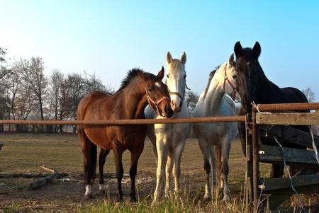Pferd auf einer grünen Wiese in sonnigen Tag, Tiere-Serie Standard-Bild