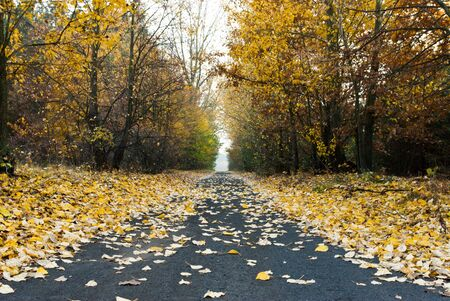 road, asphalt road under fluffy leafs, fall scenic country road photo