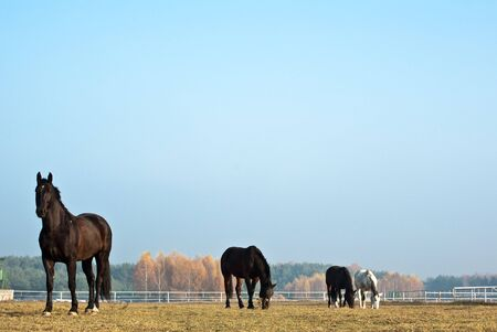 Horse in a green meadow in sunny day, animals series  Stock Photo