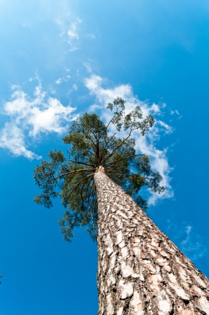 old big tree on color background with blue sky Stock Photo - 13902667