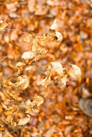 autumn background with colored leaves on wooden board Stock Photo - 13963546