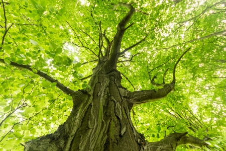 old big tree on color green background with green leafs Stock Photo - 14320888