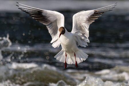 Sonniger Vogel