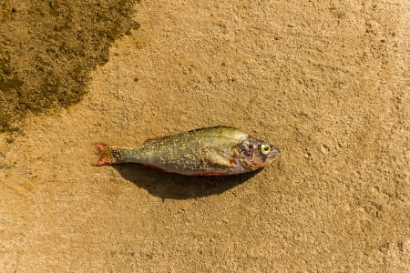 wild fish in lake, nature series Stock Photo - 14549292