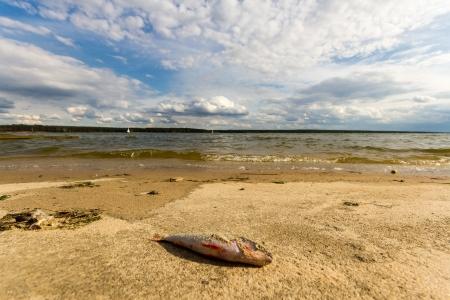 wild fish in lake Stock Photo - 14549082