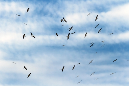 many birds flying in the sky, nature series Stock Photo - 14930560