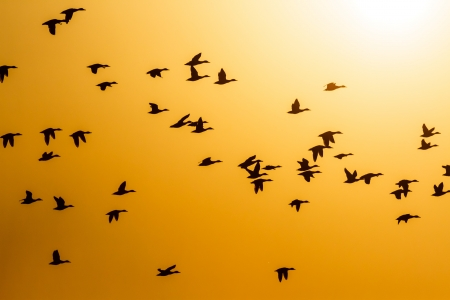 many birds flying in the sky, nature series Stock Photo - 14931909
