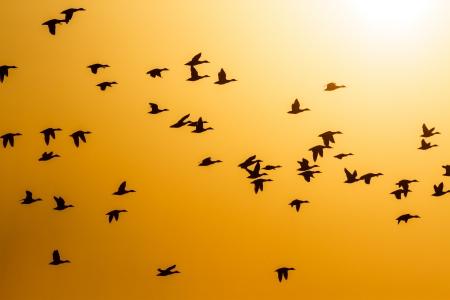 zwerm vogels: veel vogels vliegen in de lucht, de natuur-serie