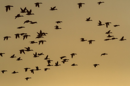 many birds flying in the sky, nature series Stock Photo - 14931865