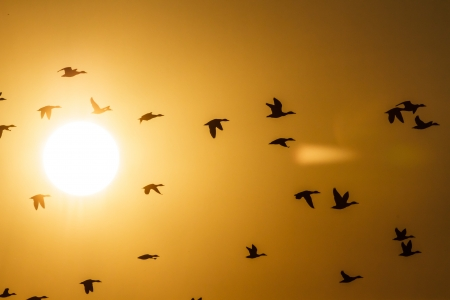 birds lake: many birds flying in the sky, nature series