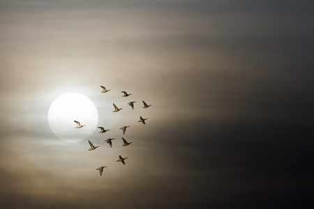 many birds flying in the sky, nature series Stock Photo - 14931870