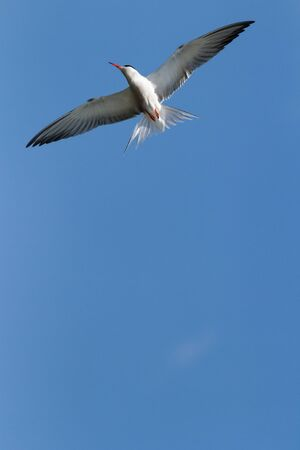 many birds flying in the sky, nature series Stock Photo - 14931828