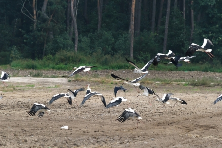 many birds flying in the sky, nature series Stock Photo - 14931824