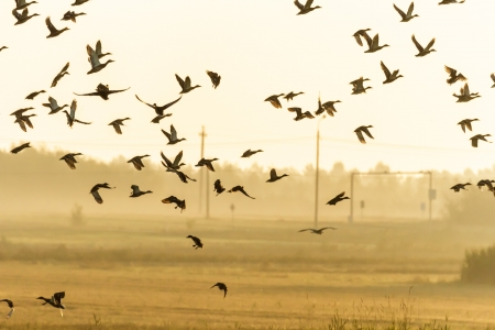 viele Vögel fliegen in den Himmel, Natur-Serie Standard-Bild