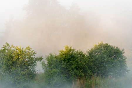 morning fog over a meadow, nature series Stock Photo - 15888624