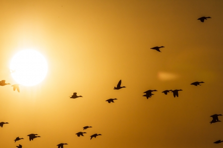 many birds flying in the sky, nature series Stock Photo - 15888579