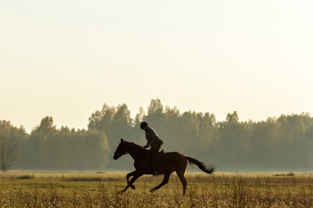 horse in a field, farm animals series photo