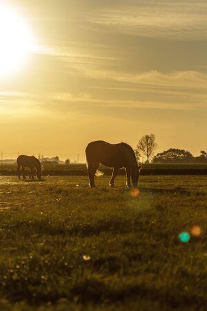horse in a field, farm animals series photo