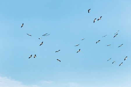 many birds flying in the sky, nature series photo