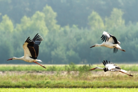 Storks on green grass in sunny day on field Imagens