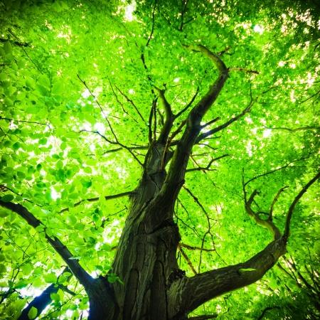 alten gro?en Baum auf farbigem Hintergrund mit blauem Himmel