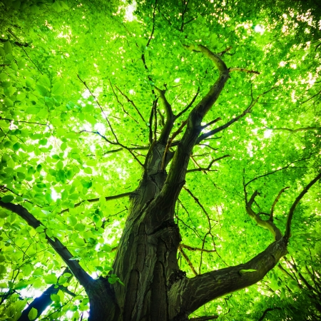 old big tree on color background with blue sky Stock Photo