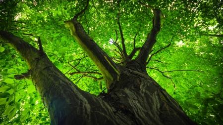 alten großen Baum auf farbigem Hintergrund mit blauem Himmel