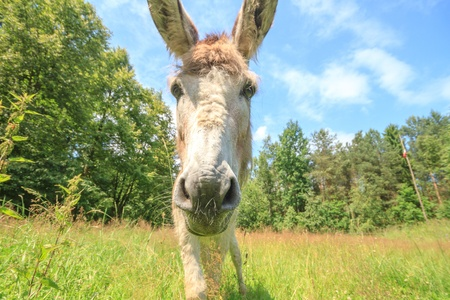 Donkey in a Field of yellow Flowers in sunny day photo
