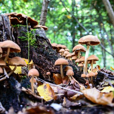 bir: forest mushroom in moss after bir longtime rain Stock Photo