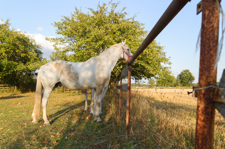 horse in a field, farm animals, nature series photo