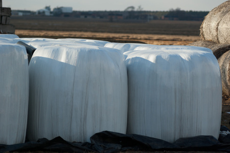 bales: silage, bales, hay bales, plastic wrap cover for wheat cereal bales outdoor