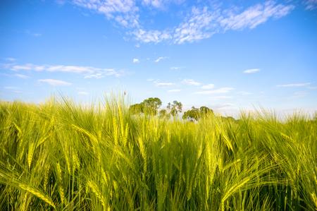 agricultura: campo agr�cola, naturaleza y agricultura agricultura serie
