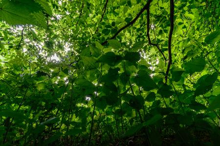 Piante verdi nella foresta