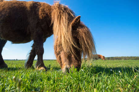 beast ranch: horse in a field, farm animals, nature series