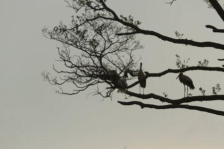 beine spreizen: St�rche auf gr�nem Gras im sonnigen Tag, Natur-Serie Lizenzfreie Bilder
