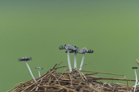 forest mushroom after longtime rain, nature series